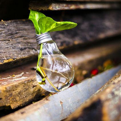 צמח צומח מתוך נורת זכוכית מלאה במים